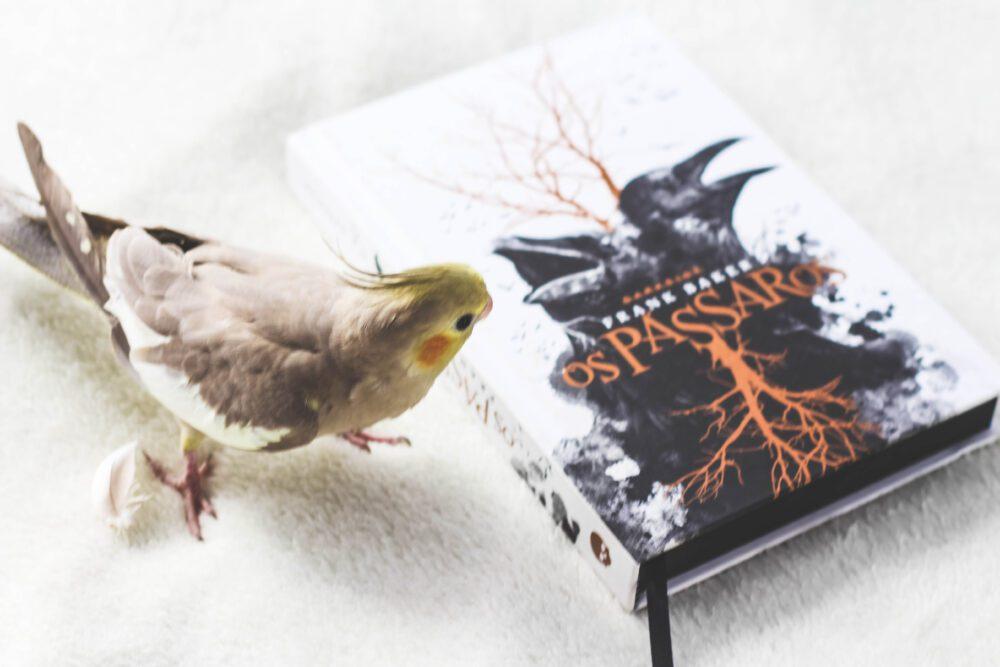 """""""Os Pássaros"""", de Frank Baker e as nossas expectativas"""